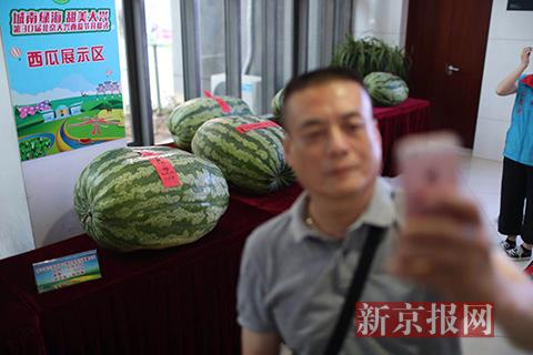 """大兴西瓜节开幕 77.06公斤新""""瓜王""""引围观"""