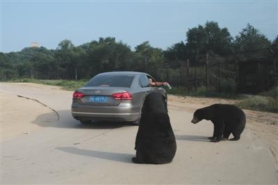 八达岭野生动物园一游客被熊咬伤